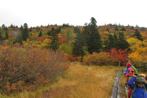 色彩豊かな森