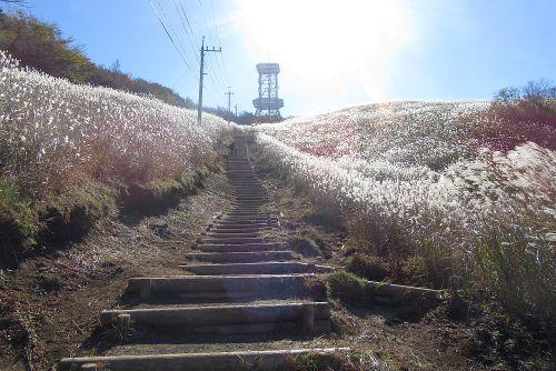 ススキ原の階段