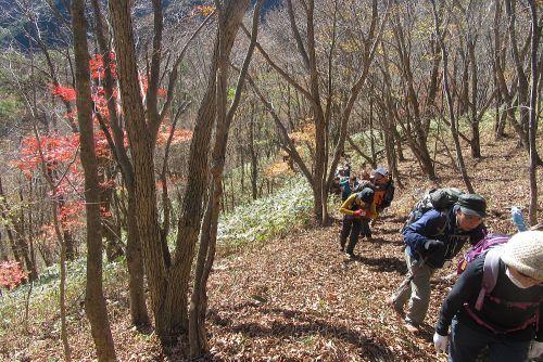 紅葉斜面を登る