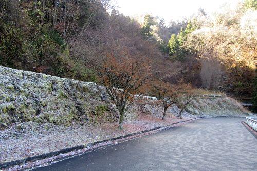 霜が降りた