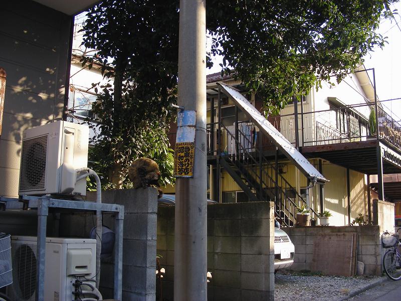 電柱ブロック塀キジトラ猫1