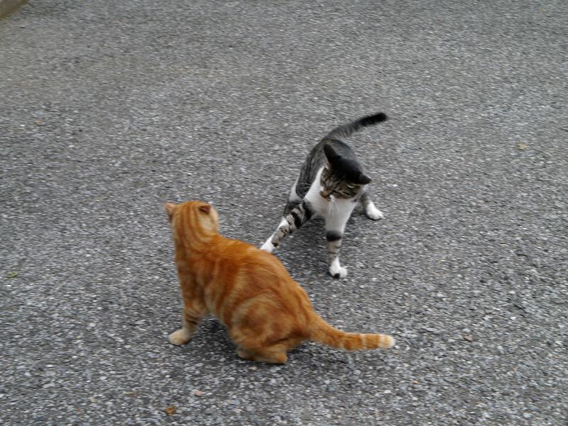 猫パンチを出す猫受ける猫1