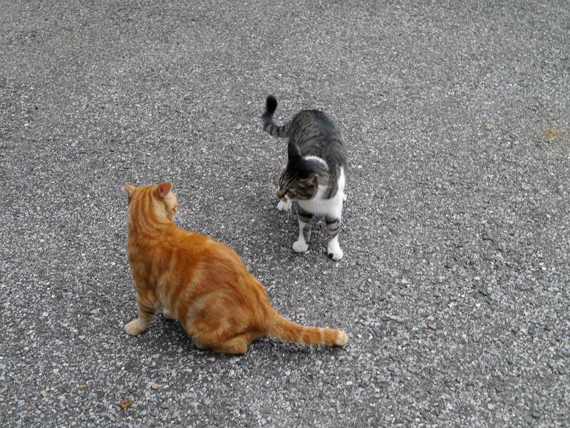 猫パンチを出す猫受ける猫2