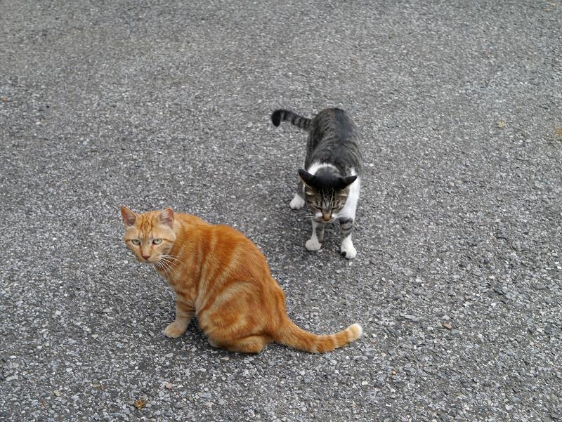 猫パンチを出す猫受ける猫3
