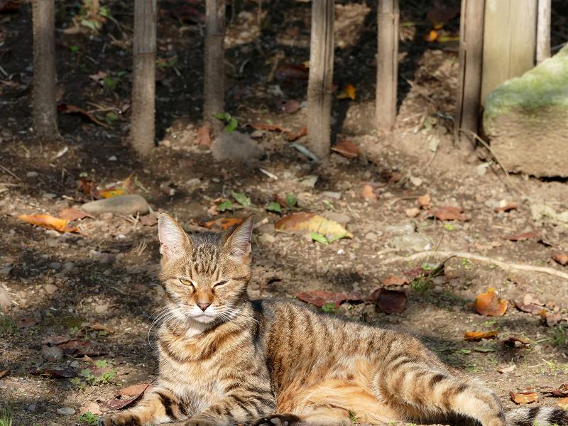 林の手前のキジトラ猫1