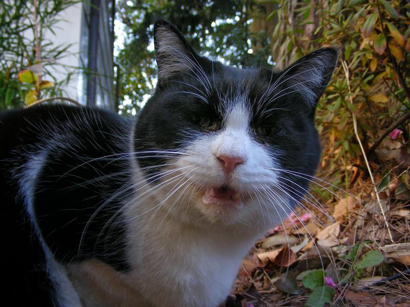 黒白猫のローアングルアップ