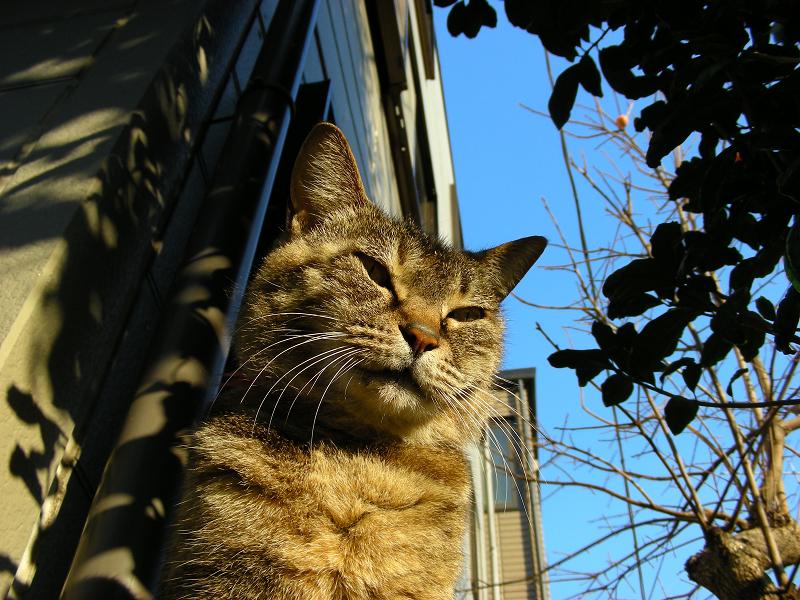 キジトラ猫と青空のローアングル1