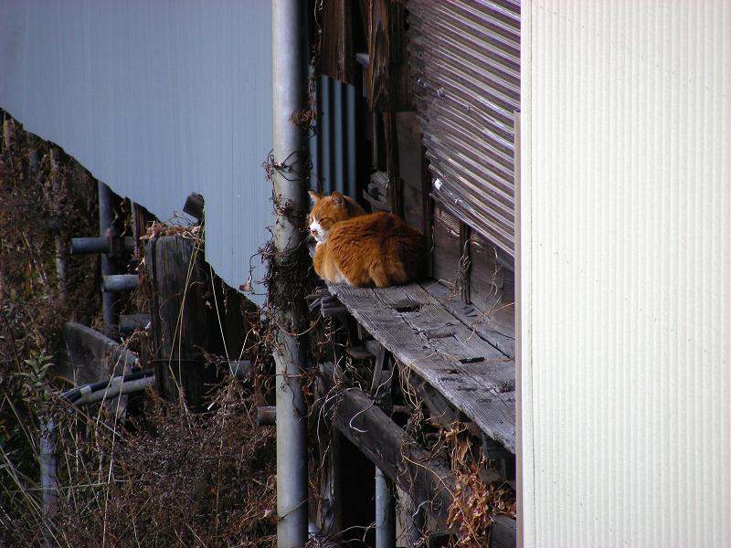 細い縁側の猫2