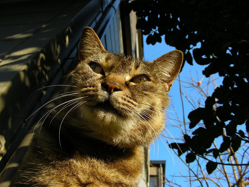 キジトラ猫と青空のローアングル3