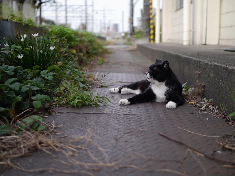 駅構内の黒白猫