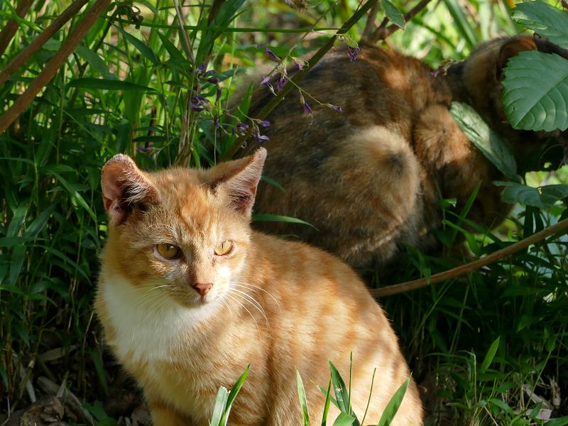 茶白の子猫1