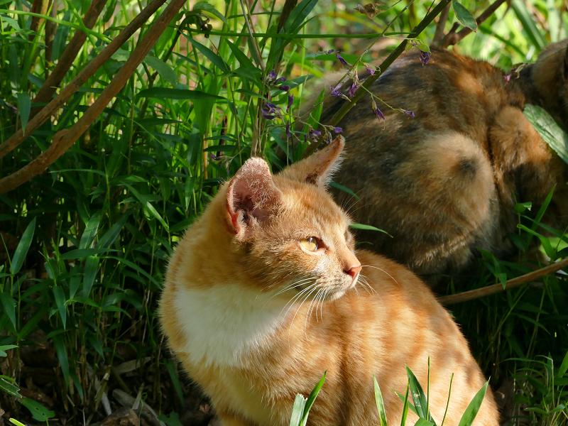 茶白の子猫2