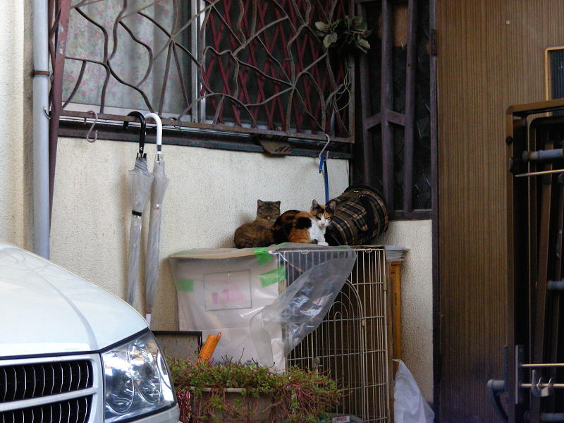 玄関ケージと猫たち1