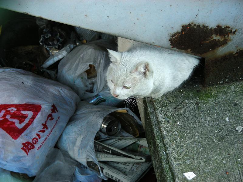 階段下の白猫1