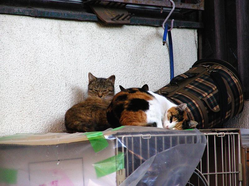 玄関ケージと猫たち2