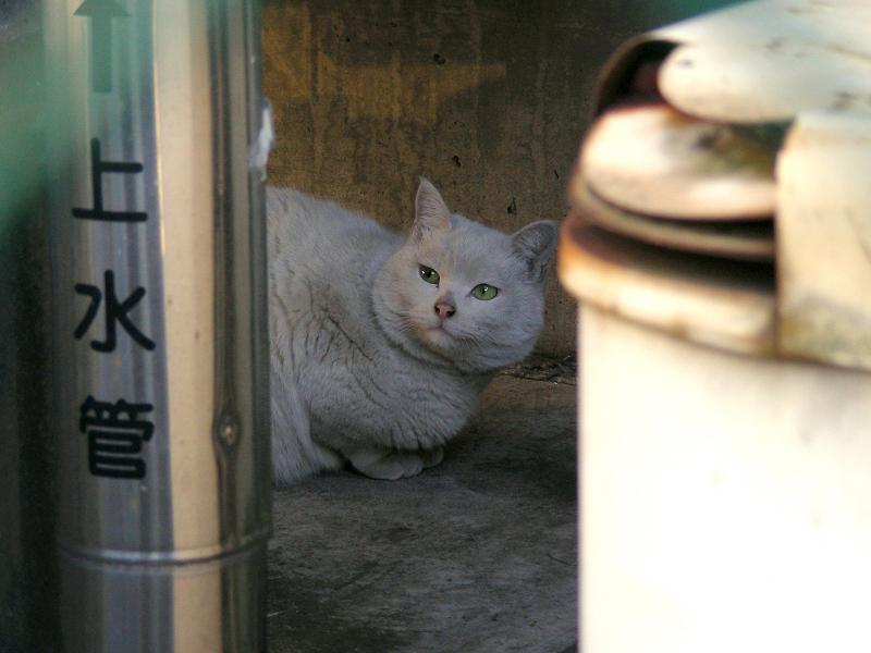 階段下の白猫2