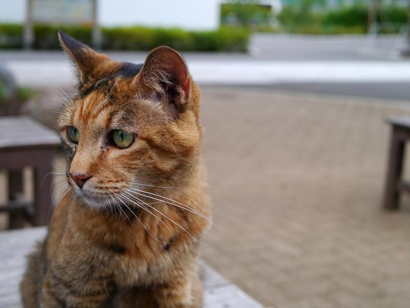 テーブルから見渡すサビ柄猫1