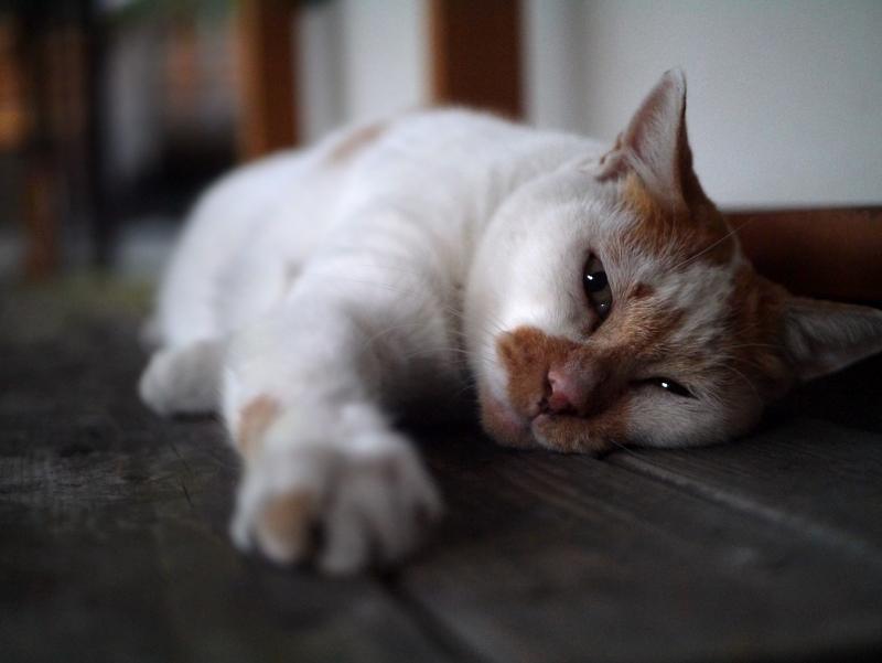 通路ベンチ上で寝ている茶白猫
