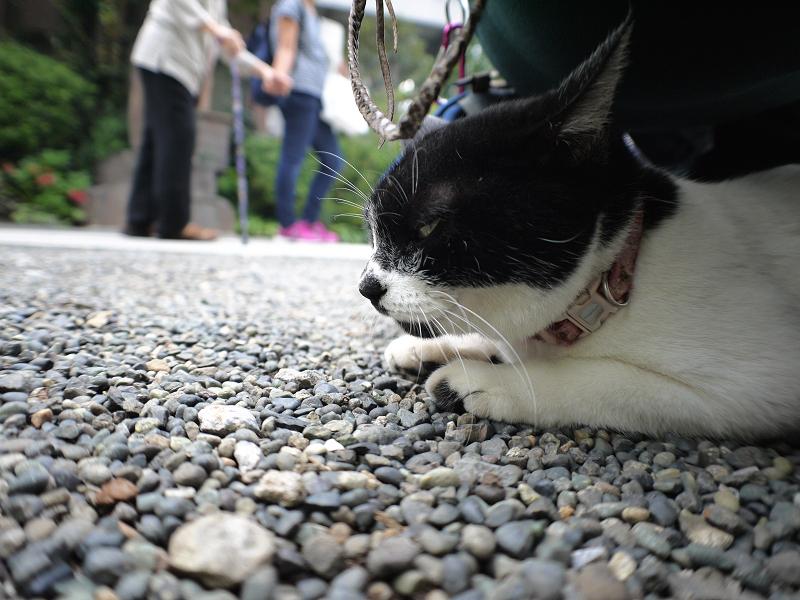 尻の下の白黒猫1