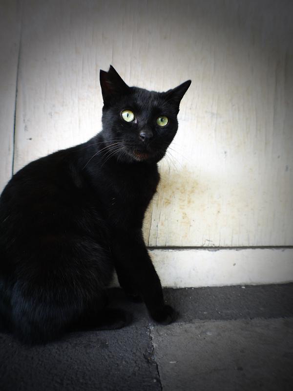 壁前の黒猫1