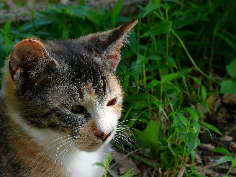 三毛猫の子猫1