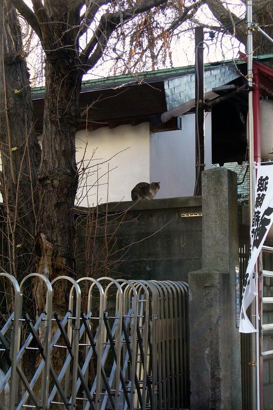 神社ブロック塀のキジ白猫1