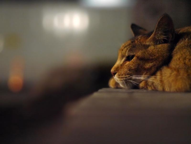 テーブルのサビ猫2