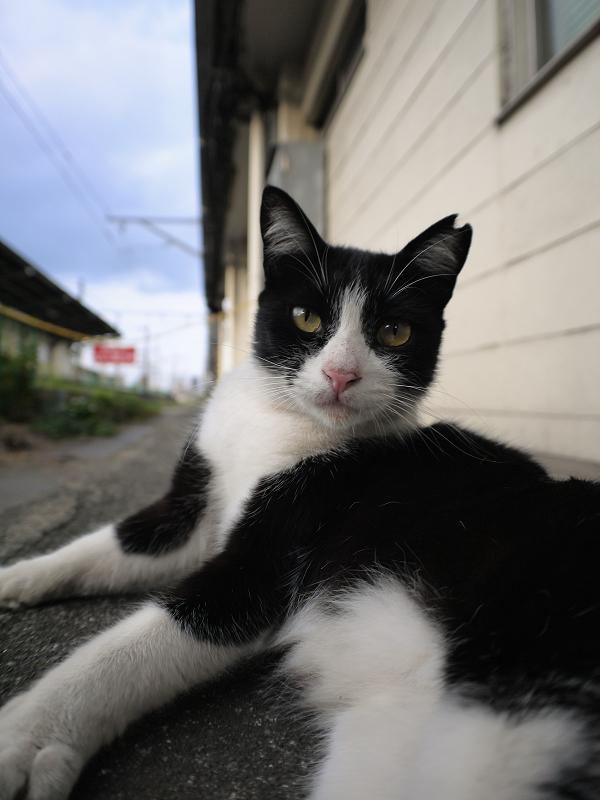 駅構内の黒白猫1