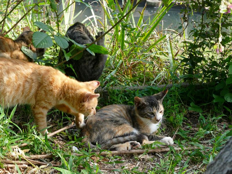 草むら日だまりの子猫たち1