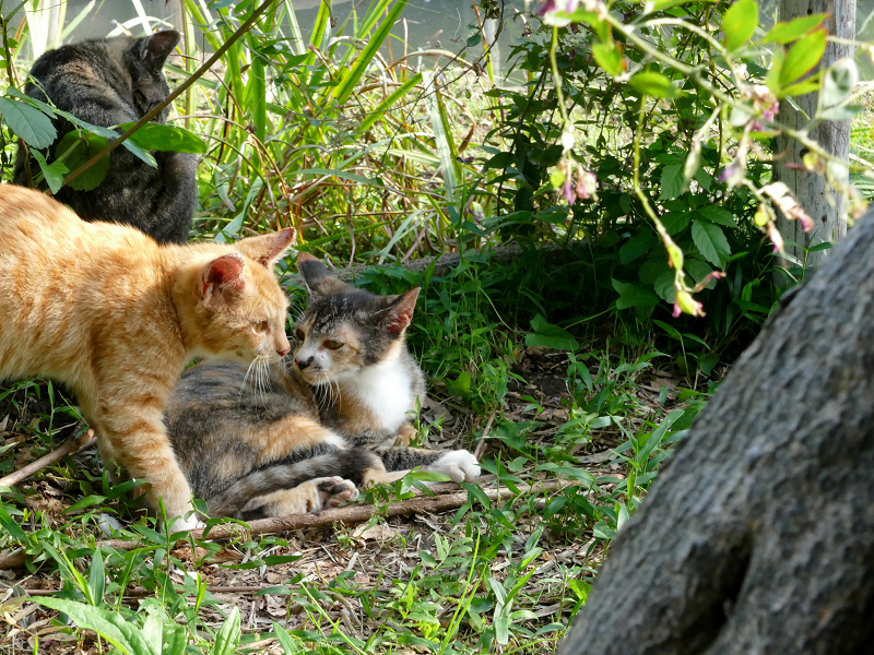 草むら日だまりの子猫たち2