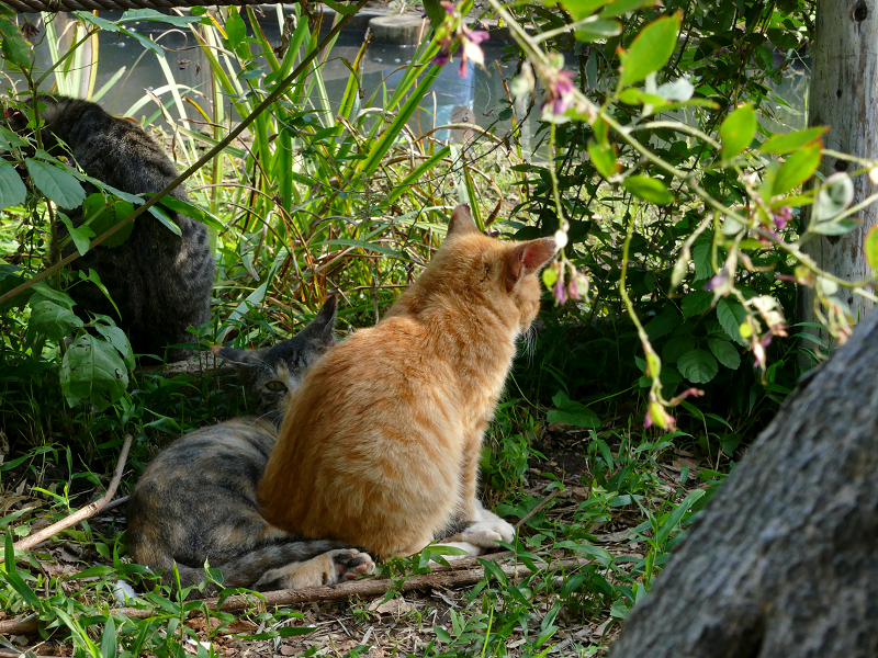 草むら日だまりの子猫たち3