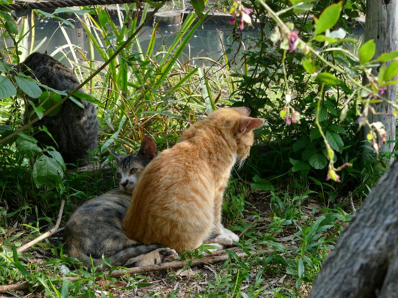 草むら日だまりの子猫たち4