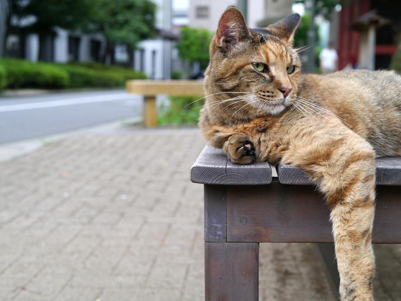 テーブルで脱力してるサビ柄猫1
