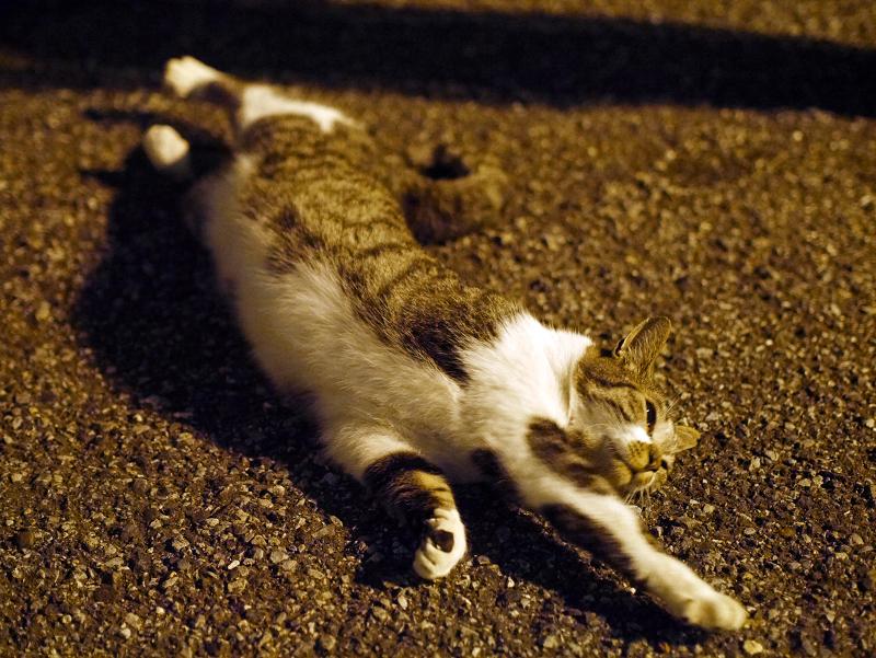外灯の下で伸びをするキジ白猫1