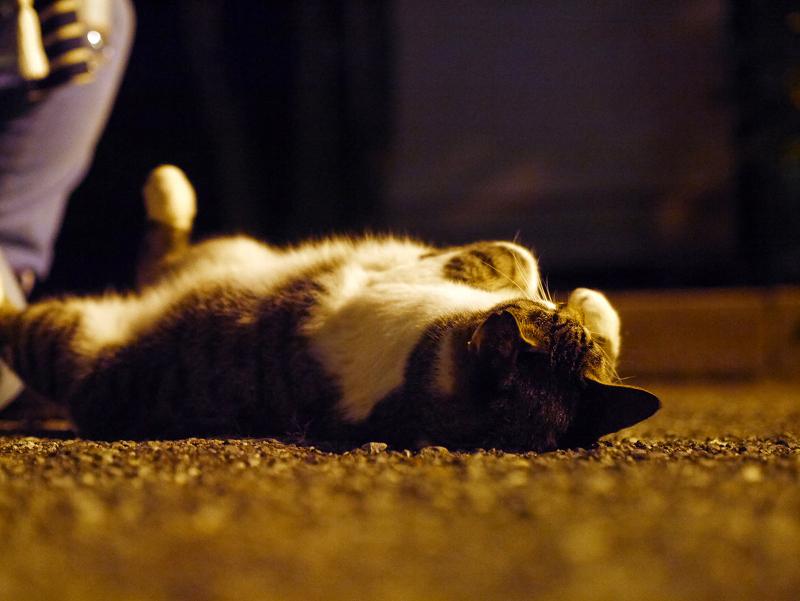 外灯の下で伸びをするキジ白猫2