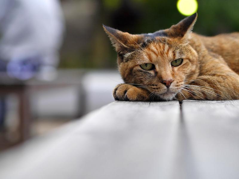 テーブルで脱力してるサビ柄猫2