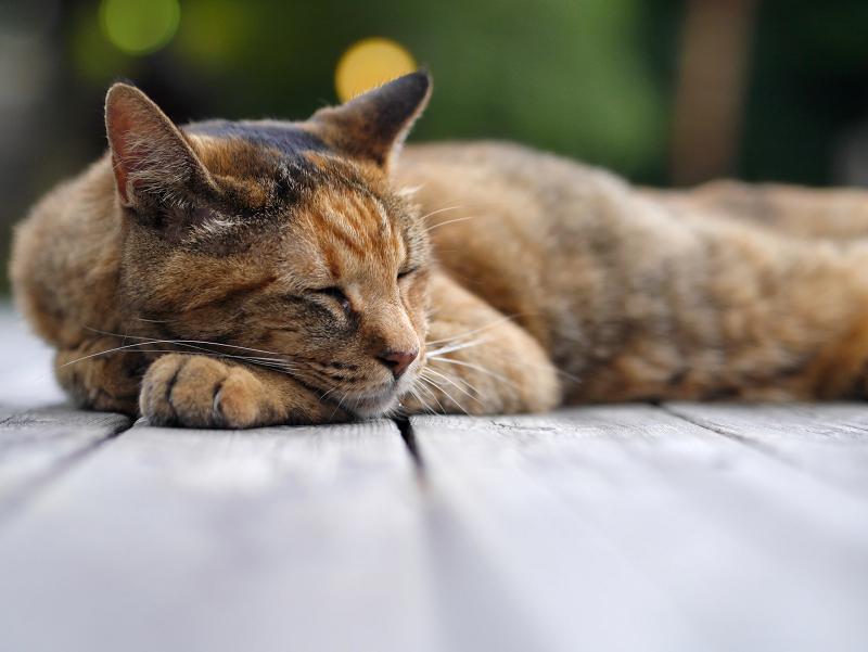 テーブルで脱力してるサビ柄猫4