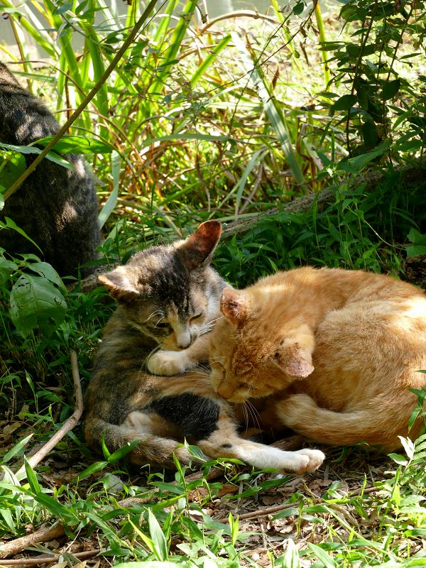 日だまり草むらの子猫たち1
