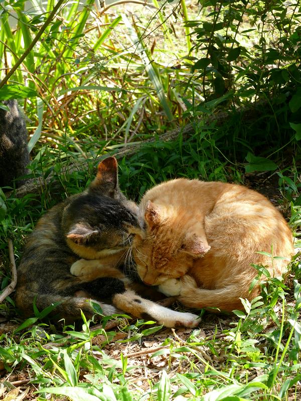 日だまり草むらの子猫たち2