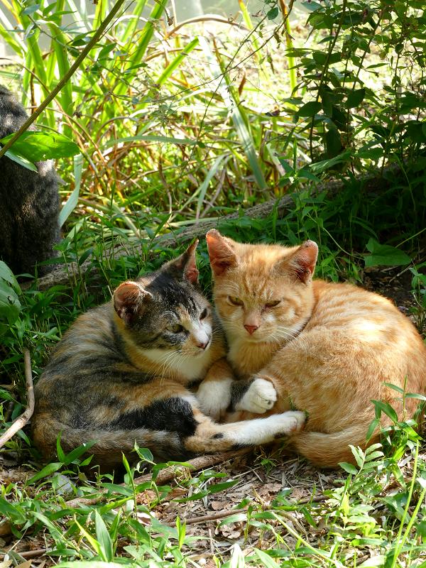 日だまり草むらの子猫たち3
