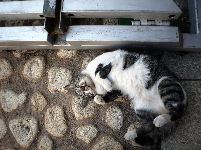 足元のかわいいキジ白猫2
