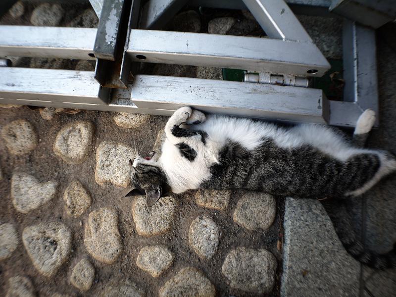 足元のかわいいキジ白猫3
