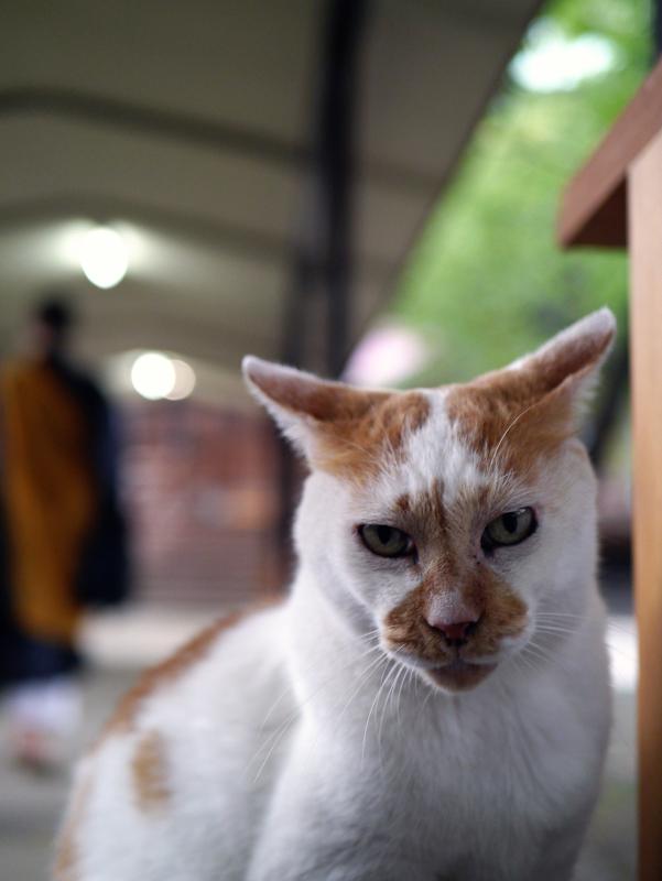 夕暮れ通路と茶白猫3