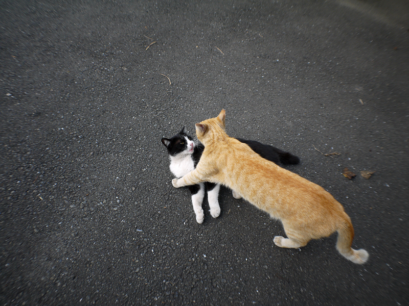 茶トラ猫と黒白猫のハイアングル1