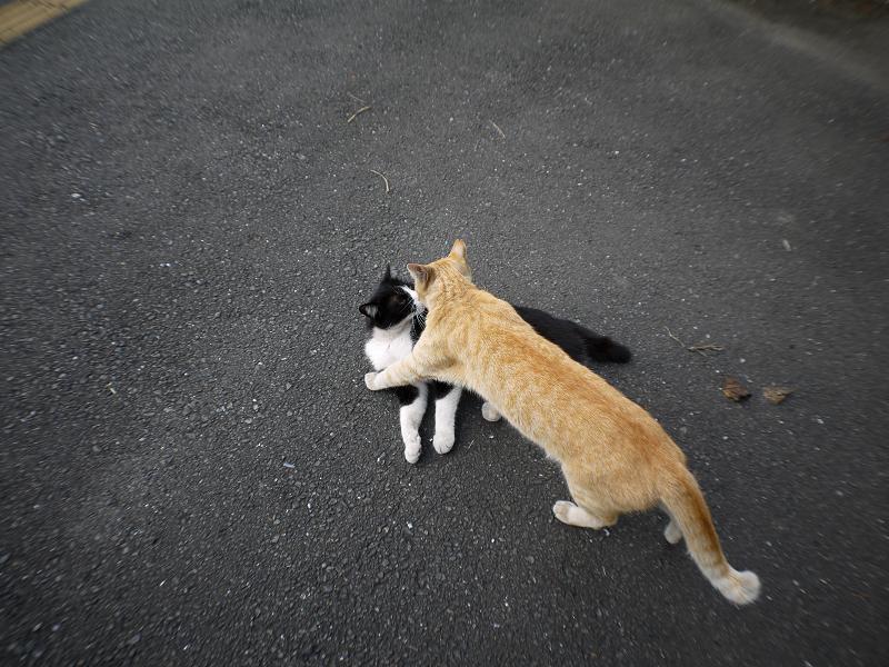 茶トラ猫と黒白猫のハイアングル2