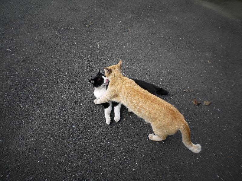 茶トラ猫と黒白猫のハイアングル3