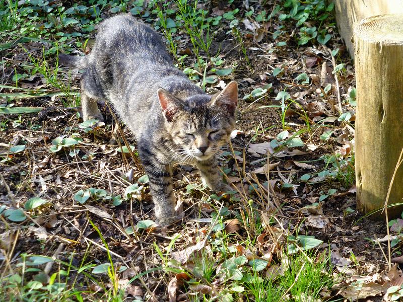 草むらを歩く子猫3