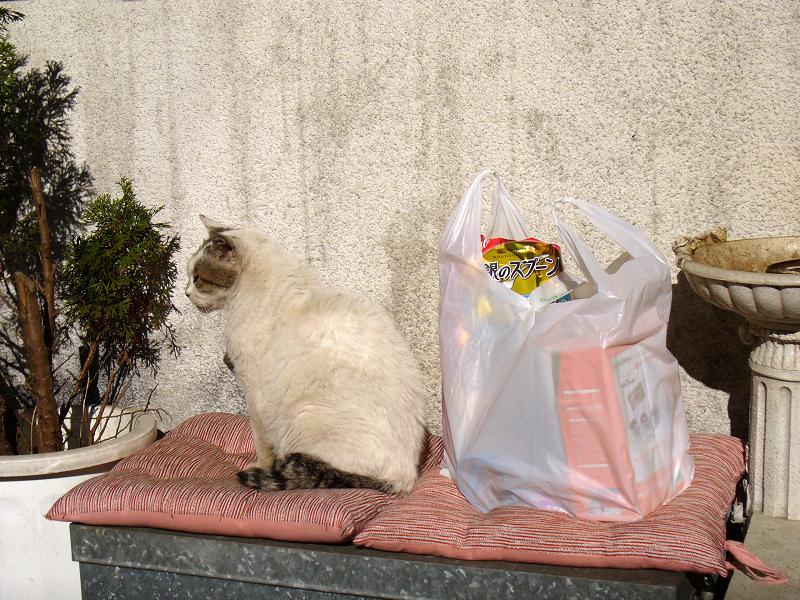 クッションとキャットフードと白キジ猫