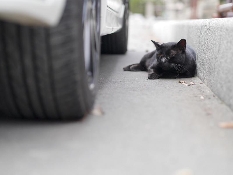 縁石と黒猫1