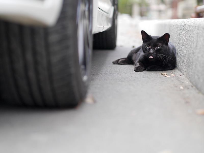 縁石と黒猫4